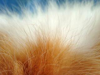 ミンミンのお腹の毛