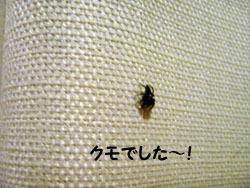 クモでした…