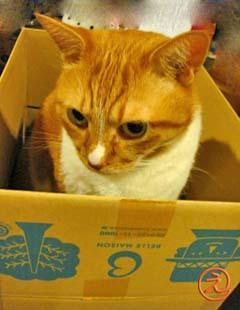 箱好きミンミン