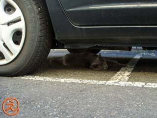 ママ子は車の下で