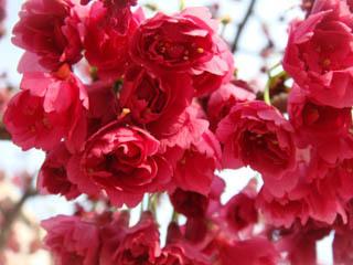 小さい花がたくさん!
